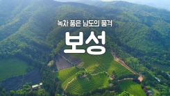 [YTN 구석구석 코리아] 녹차 품은 남도의 품격, 보성