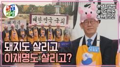 [돌발영상] 돼지와 정치의 오해와 진실?