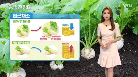 농업전망대 8부 : 엽근·양념채소(2)
