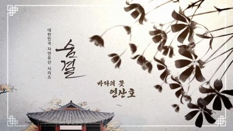 '바다의 꽃 연산호' 제주연안 연산호 군락 (천연기념물 제442호)