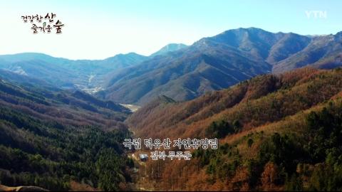 [건강한 산 즐거운 숲] 국립 덕유산 자연휴양림