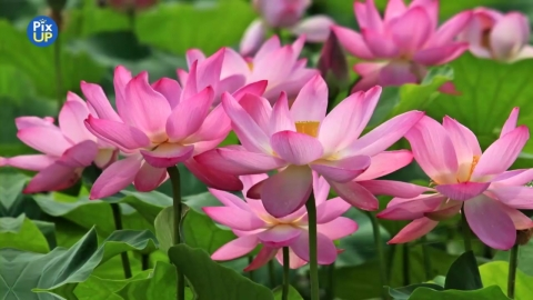 [PIX UP] Lotus Festival