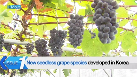 [K-MOVE] Seedless Grape Cultivars