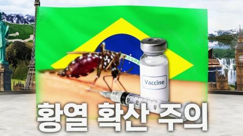 브라질 황열 확산, 출국 전 예방접종 하세요!