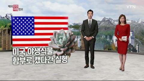 한국서 산나물 뜯듯 미국서 식물 캤다간…실형!