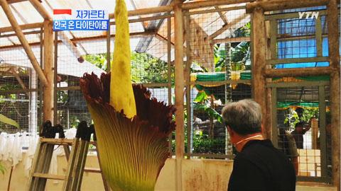 세계 최대의 꽃 '타이탄아룸'...한국 가는 길