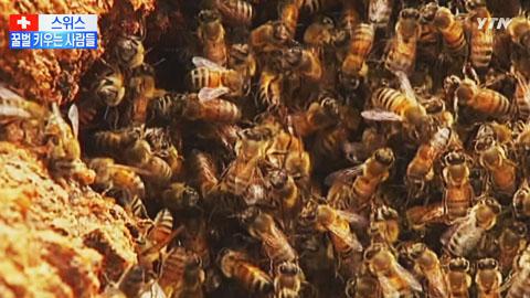 도심에서 꿀벌 키워요!...스위스 양봉가들