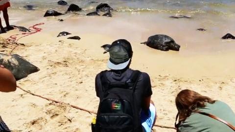 '야생 거북이'를 지키는 사람들