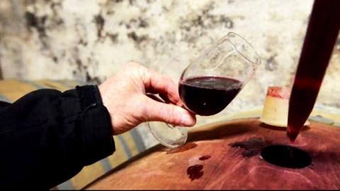 [세상교과서] 프랑스 와인 산업에 유기농 바람