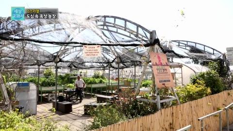 [세상교과서] 텔아비브를 푸르게 푸르게, 옥상 농장