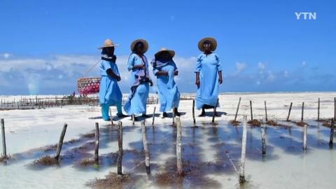지역 주민과 자연 공생 이룬다! 잔지바르 '해초센터'