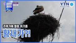주택가에 멸종 위기종 황새가?!