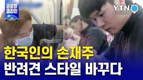 한국인의 손재주, 호주&브라질 반려견의 스타일을 바꾸다!