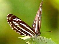 봄소식을 전하는 나비