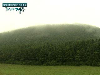 [YTN 특별기획·영상보고] 화산섬 제주 3부 - 용암이 만든 미로, 거문오름