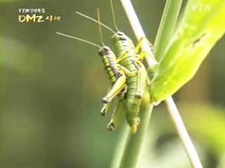 [YTN 신년특집] DMZ 사계 2부 경쟁