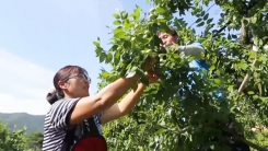 [YTN 스페셜] 2015 농어촌 희망 프로젝트 '농비어촌가' : 살고 싶은 농촌마을의 비밀
