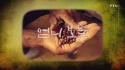 [YTN 스페셜] '엄니 보물' 토종