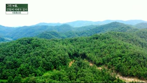 [YTN 특집] 그린 뉴딜, 산림에 미래가 있다 - 2부 K포레스트