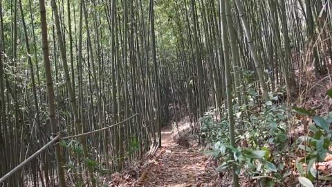 [수목원 산책] 자굴산 치유수목원