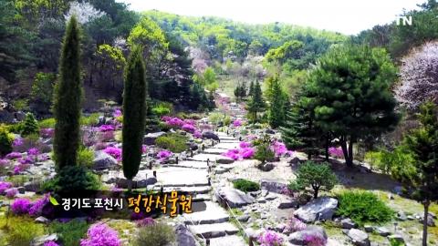 [수목원 산책] 평강식물원