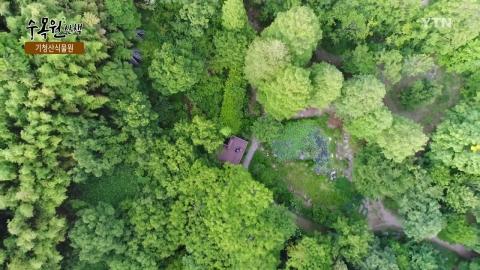 [수목원 산책] 기청산식물원