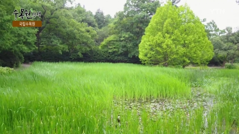 [수목원 산책] 국립수목원