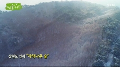 [삼삼오오 우리 숲 이야기] 자작나무