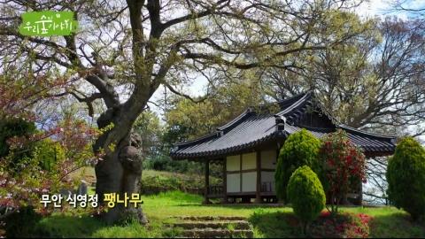[삼삼오오 우리 숲 이야기] 팽나무