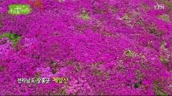[삼삼오오 우리 숲 이야기] 철쭉, 진달래
