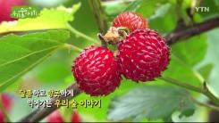[삼삼오오 우리 숲 이야기] 왕버드나무, 산딸기