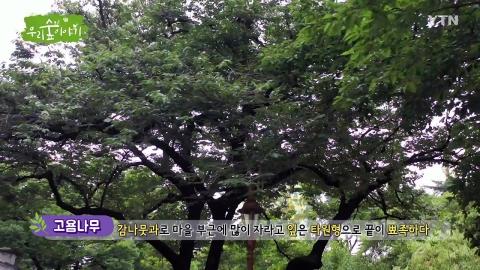 [삼삼오오 우리 숲 이야기] 고욤나무, 도라지