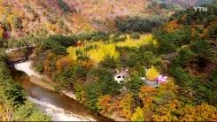 [삼삼오오 우리 숲 이야기] 은행나무숲, 배초향