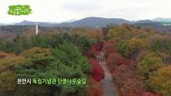 [삼삼오오 우리 숲 이야기] 단풍나무, 구기자나무