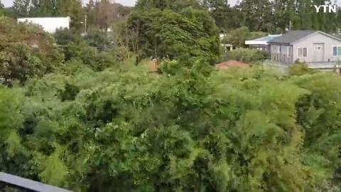 [사고현장] 태풍 타파 제주 서귀포 현지상황