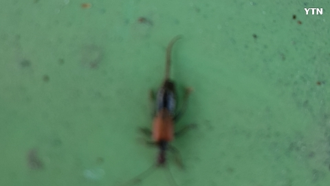 [기타] 화상벌레